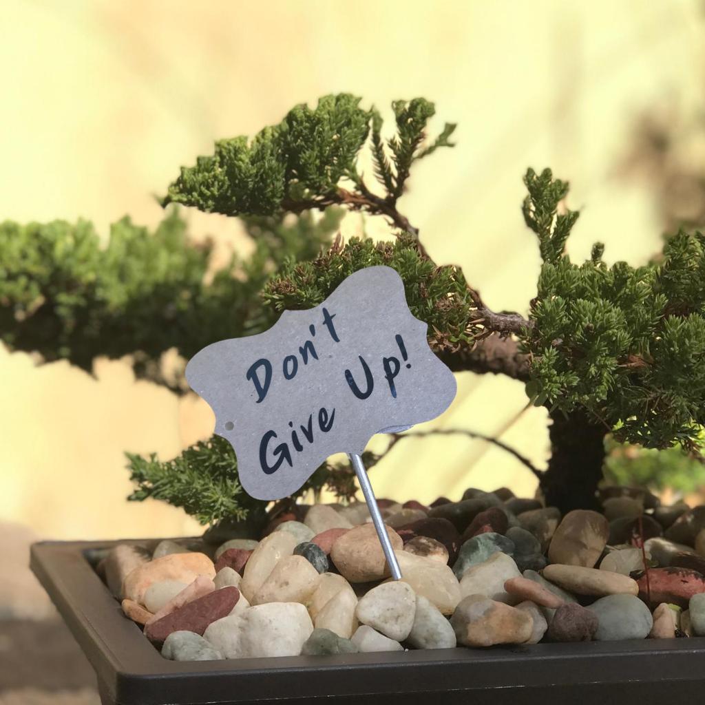 bonsai don't give up